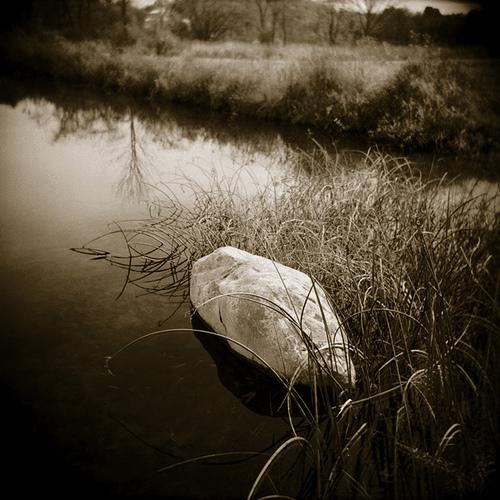 Untitled pond Holga photo
